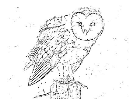 Little Critters Corner Free Coloring Page Barn Owl AWARE