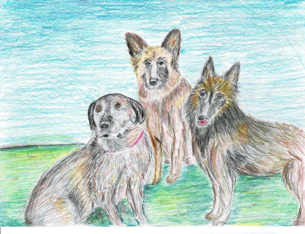 """""""Three Dogs"""" by Jamie W."""