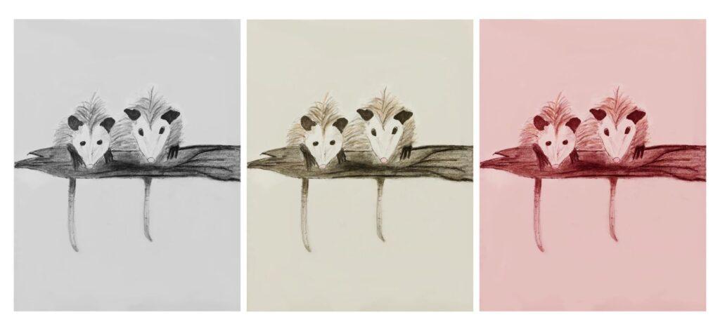 """Opossum Tryptych"" by Lindsey G."