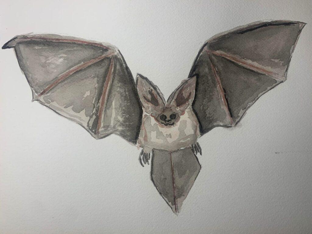 """""""Bat"""" by Leah G."""