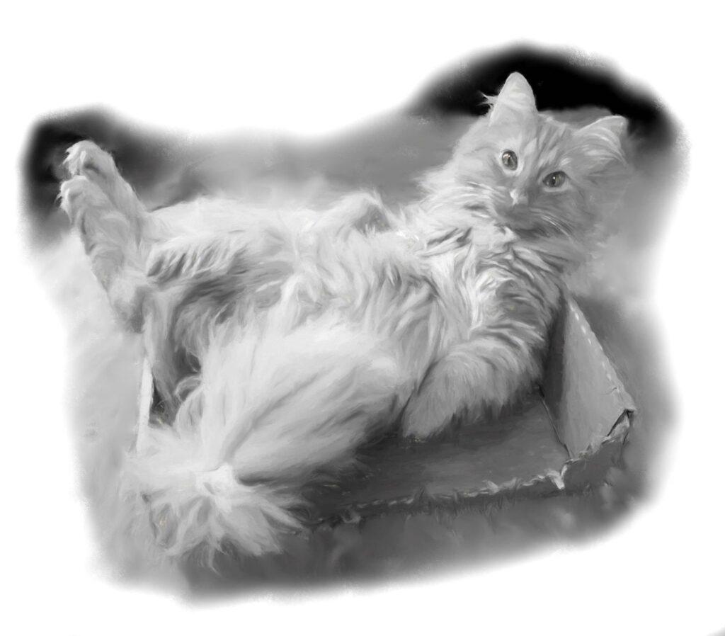 """""""Cat"""" by Jody D."""