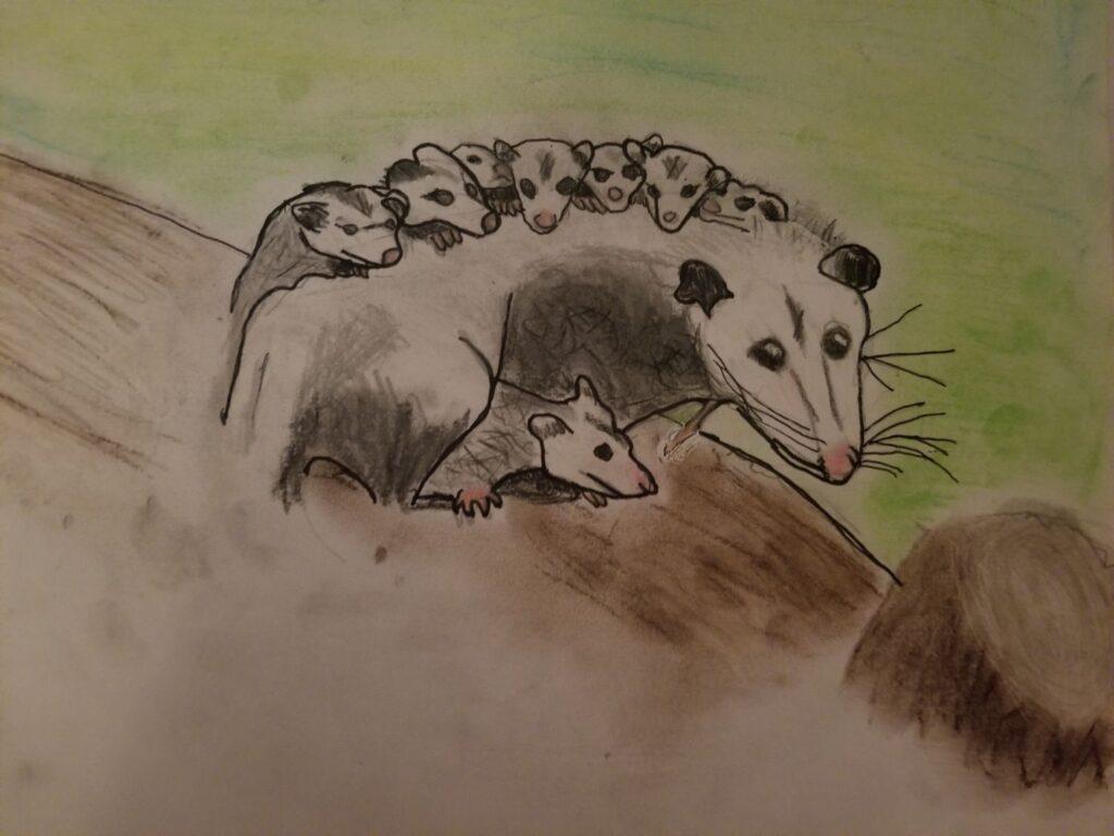 """""""Opossum Family"""" by Jennifer F."""